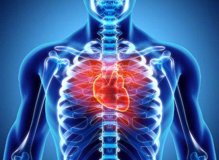 C'era n'aorta….il cuore! La dissezione di un cuore di suino per conoscere la morfologia del muscolo cardiaco